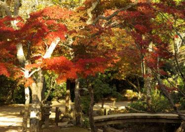 宮島・紅葉谷公園の紅葉を見る最適な時期とは?アクセス方法